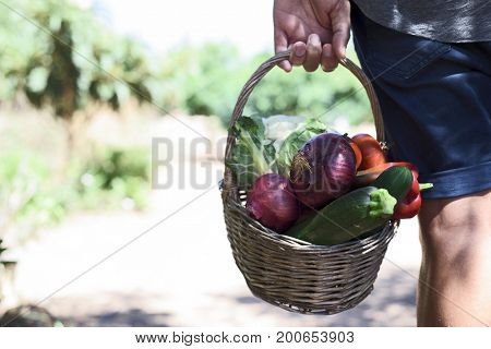 closeup of a young caucasian man seen from behind with a rustic basket full of vegetables freshly collected in an organic orchard