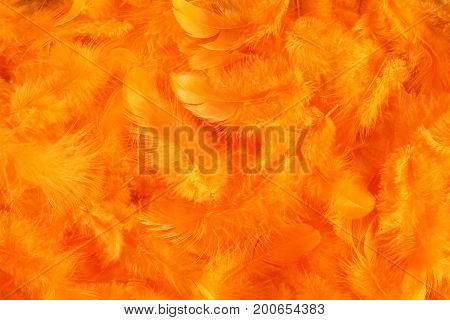 Background - small orange plumes situated irregularly
