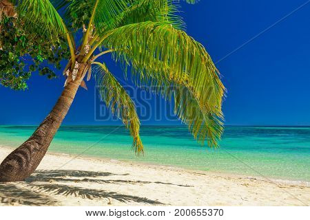 Palm tree over white beach on a a Plantation Island, Fiji, South Pacific