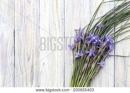 Wild, purple irises on a wooden background close up