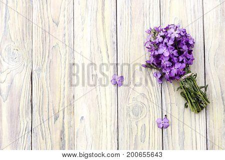 Wild purple gillyflower on a wooden background close-up