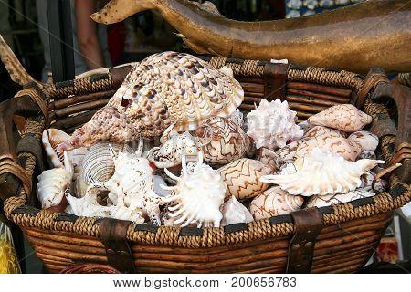 Many beautiful sea shells in a wicker basket. Greece