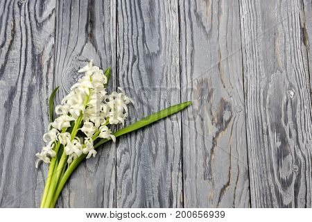White hyacinths on a wooden background close up