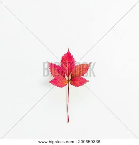Autumn leaf flat lay on white background