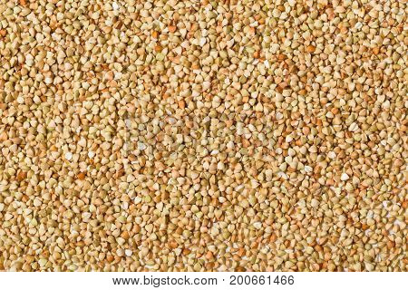 Frame filling texture background of raw uncooked buckwheat kernels