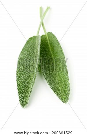 Two fresh organic sage leaves over white background