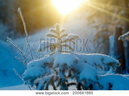 Winterchristmas christmas frozen  landscape. frozen taiga forest