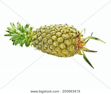 Pineapple (Ananas comosus); yellowish thick-skinned tropical fruit; side view; on white background