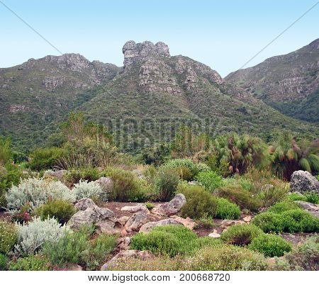 FROM CAPE TOWN, SOUTH AFRICA,  THE KIRSTENBOSCH NATIONAL BOTANICAL GARDENS, NESTLED AT THE FOOT OF TABLE MOUNTAIN 01a