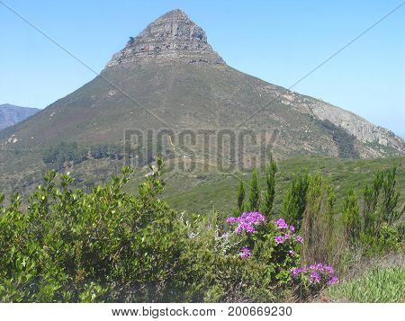 FROM CAPE TOWN, SOUTH AFRICA, LIONS HEAD IN THE BACK GROUND WITH FLOWER AND OTHER VEGETATION IN THE FORE GROUND