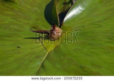 A slug crawling on a lily pad