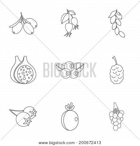 Garden berries icon set. Outline set of 9 garden berries vector icons for web isolated on white background