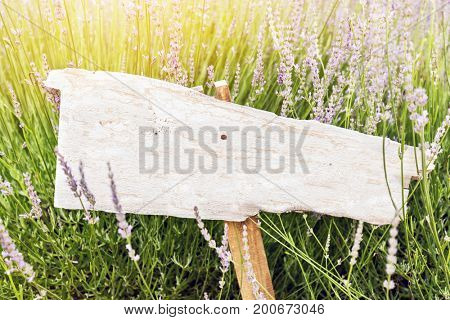 Singpost in grass and lavender field. Rustic board with copyspace