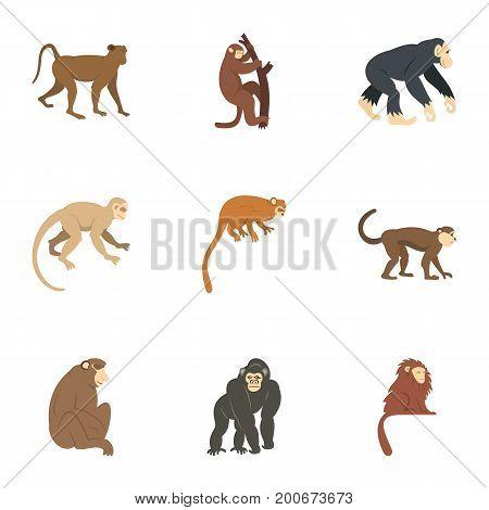 Jungle monkey icon set. Flat set of 9 jungle monkey vector icons for web isolated on white background