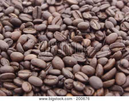 Coffee Beans. Focus In The Middle