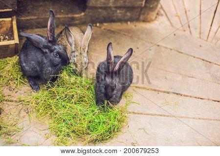 Feeding Rabbits On Animal Farm In Rabbit-hutch
