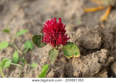 Summer Background For Advertising And Isolating - Bright Red Flowers