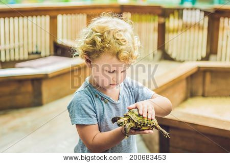 Toddler Girl Caresses And Playing With Turtle In The Petting Zoo. Concept Of Sustainability, Love Of