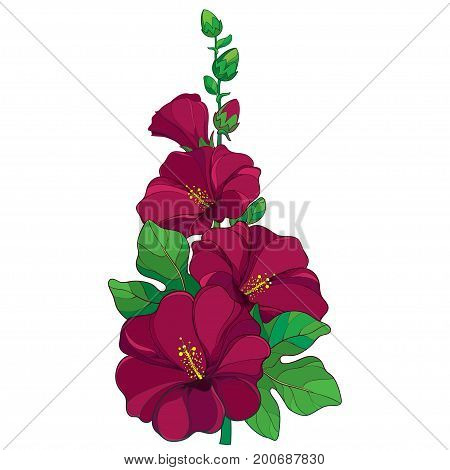 Vector bunch with outline Alcea rosea or Hollyhock flower, stem, bud and green leaf isolated on white background. Floral elements in contour style with ornate crimson Hollyhock for summer design.