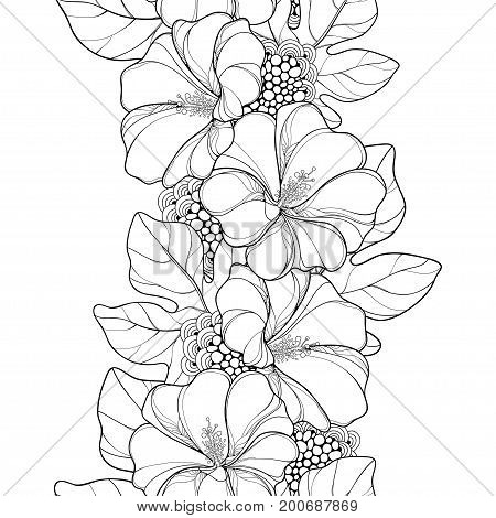 Vector seamless pattern with outline Alcea rosea or Hollyhock flower and leaves on the white background. Floral pattern in contour style with ornate Hollyhock for summer design and coloring book.