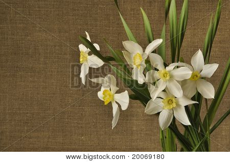 Bouquet Of Narcissuses