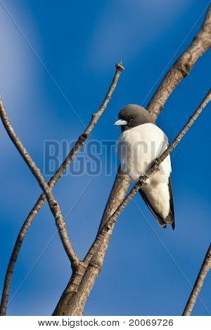 Among twigs