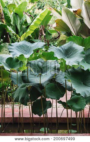 Tropical plants , vertical tropical garden decoration