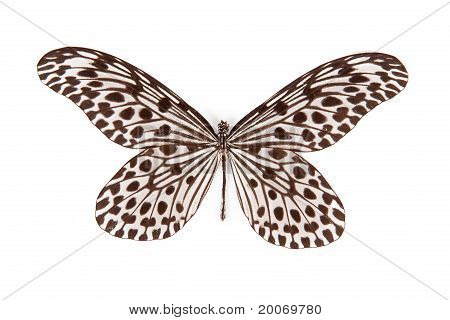Black And White Butterfly Idea Stolli Isolated On White Background