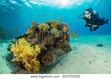 Underwater coral reef with woman scuba diver exploring sea bottom. Tropical sea with beautiful ocean ecosystem.