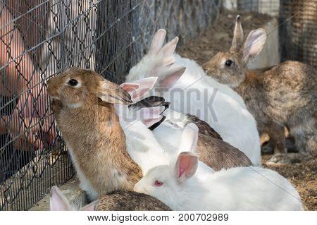 Bunnies Area At Pets' Corner In Beer-sheva Zoo. Israel