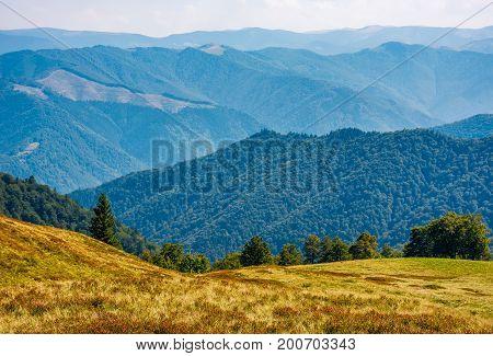 Forest On High Altitude Grassy Hillside