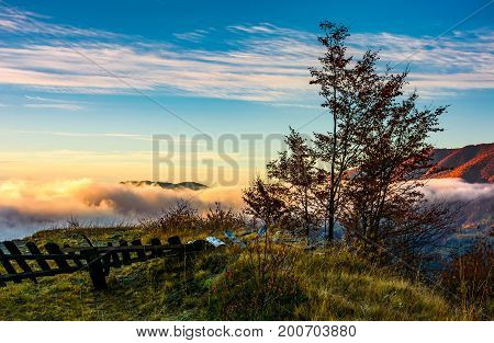 Tree On A Hump Above  The Ridge And Clouds