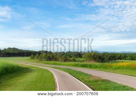 Bicycle lane asphalt road and big green tree on green meadow with blue sky background