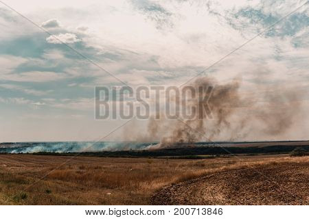 Wild fire on dry grass, natural fire on summer field, natural disaster
