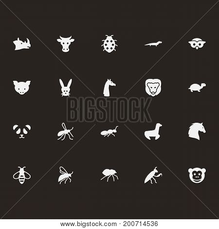 Collection Of Herculeanus, Night Fowl, Rhinoceros And Other Elements.  Set Of 20 Zoology Icons Set.