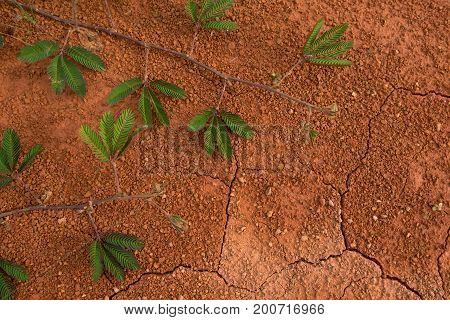 Dry cracked earth background. Cracked mud pattern with green plant awaited growth.