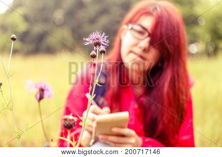 Photo of field flower on background of female botanist in woods during day