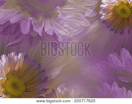 Floral light pink-white beautiful background of daisy. Wallpapers of flowers pink-yellow Chamomile. Flower composition. Nature.