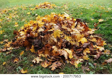 Pile of fallen leaves in autumn park. Fall background .