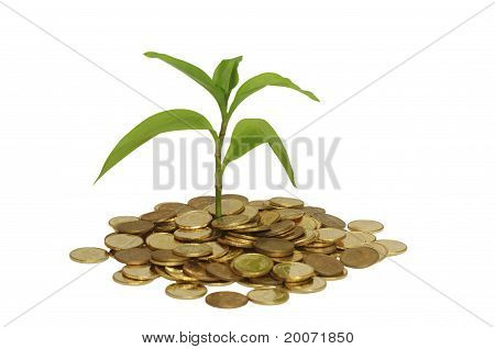 Plant And Coin