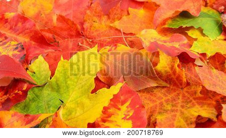 Fall leaves red yellow green background