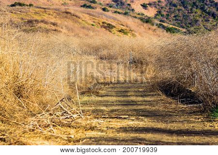 Hiking trail thru an arid dry field during a drought taken in the Whittier Hills, CA