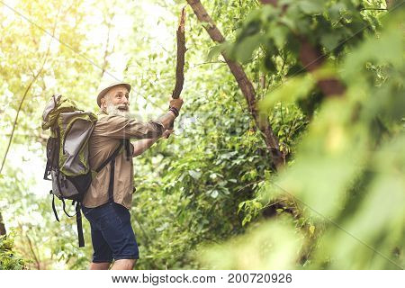 Terrified old man is raising wooden stick while looking aside with panic. He is standing in forest and carrying touristic backpack. Copy space