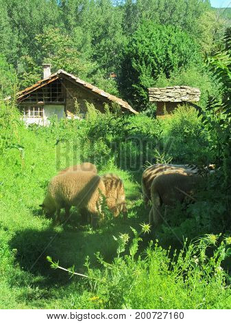 Landscape from the village of Dolno Lukovo, Bulgaria