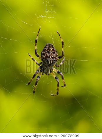 Spider On A Web.