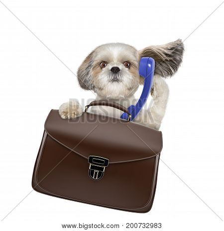 office worker businessman shitzu dog with suitcase or bag isolated on white background