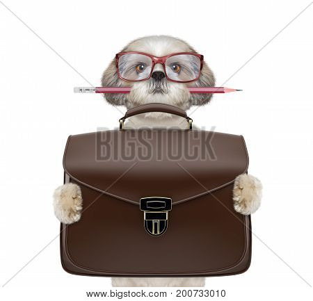businessman shitzu dog with suitcase or bag isolated on white background