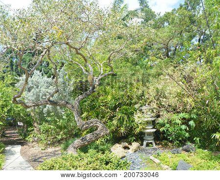 The zen green garden in Japanese style