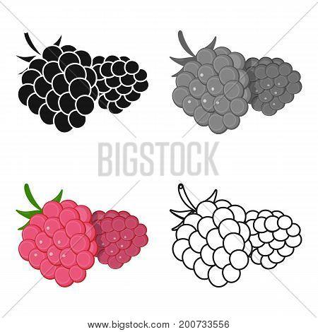 Raspberry, sweet fruit.Fruit single icon in cartoon style vector symbol stock illustration .