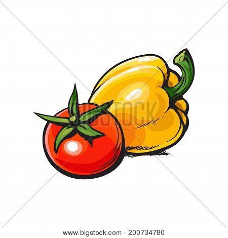 Fresh whole ripe red tomato and yellow bell pepper, sketch style vector illustration on white background. Realistic hand drawing of whole ripe red tomato and yellow bell pepper
